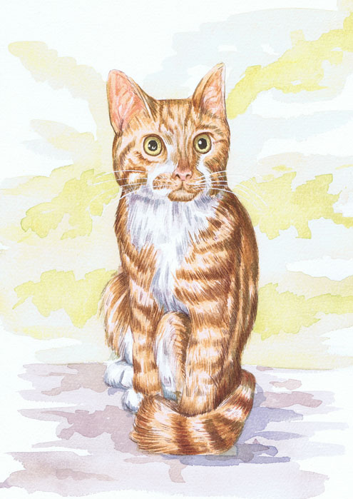 Illustration for a clients pet cat by scottish illustrator Ron M Smith The Illustration Room.